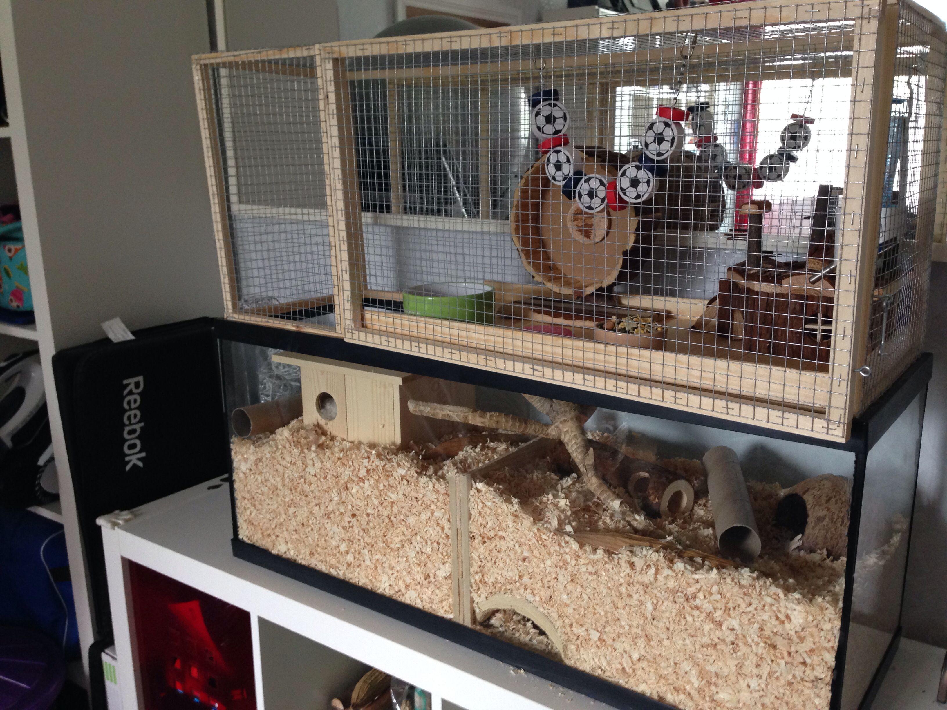 Selbstgemachter Aufsatz Fur Nagarium Wustenrennmaus Hamster