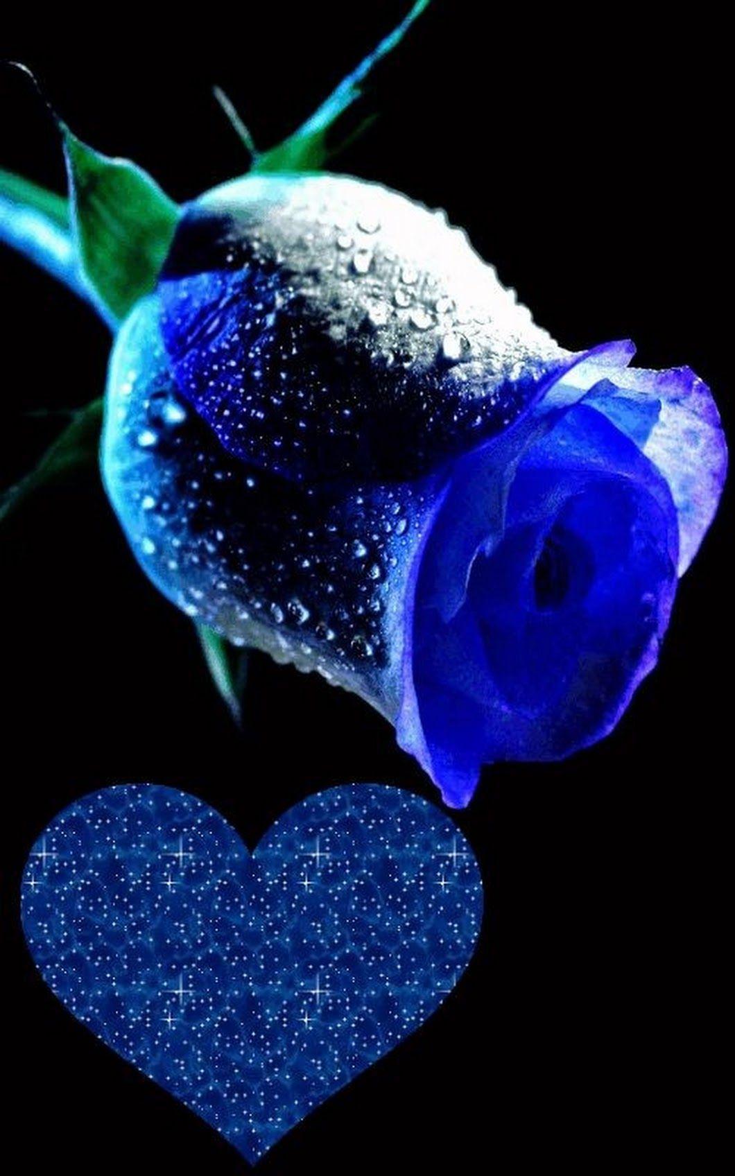 Аниме для, синяя роза гифы