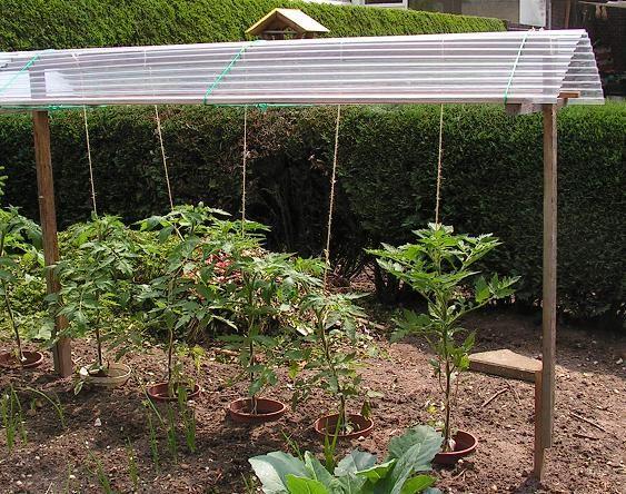 7 roof over sweet peppers or tomatoes rankger st pinterest tomaten dach gem segarten und. Black Bedroom Furniture Sets. Home Design Ideas