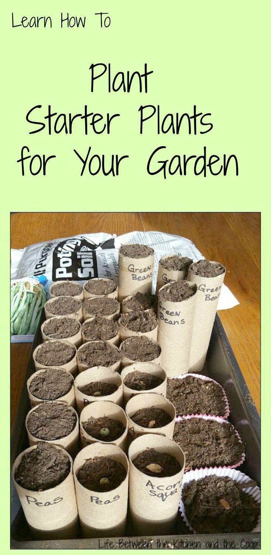 how to plant starter plants for your garden | gardening tips