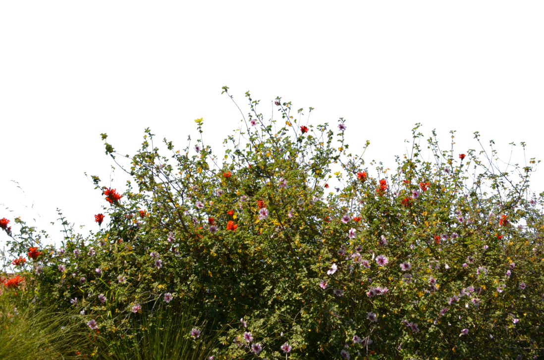 Wild Flower Ground Cover Stock Photo 0080 Png By Annamae22 Ground Cover Wild Flowers Plants