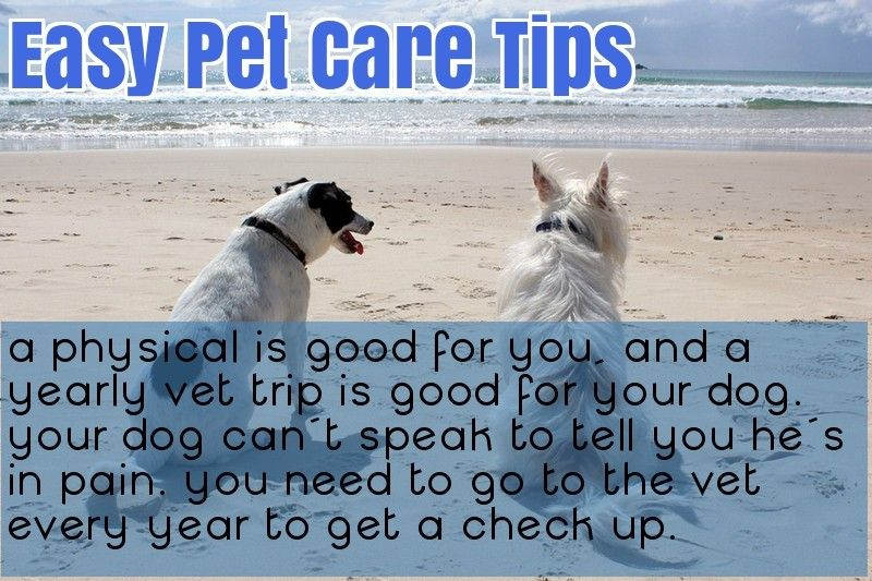 Pin On Pets Dogs