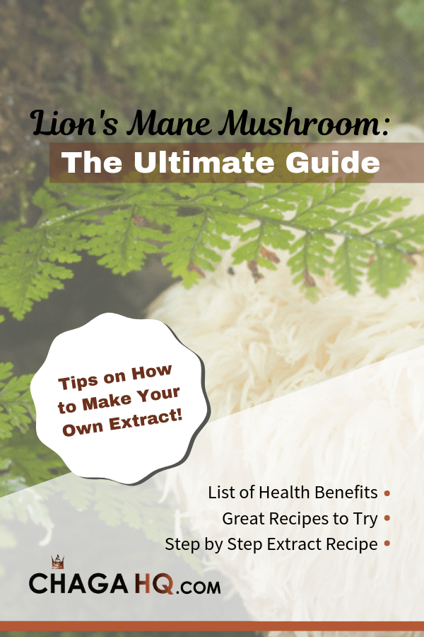 Lion's Mane Mushroom - The Ultimate Guide | Chaga HQ