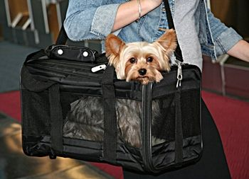 Sherpa Original Deluxe Pet Carrier Review Dog Travel Crate Airline Pet Carrier Pet Carriers