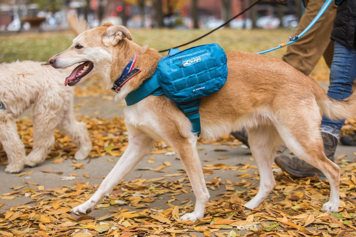 Rsg Dog Townie Harness Biking With Dog Dog Travel Hiking Dogs