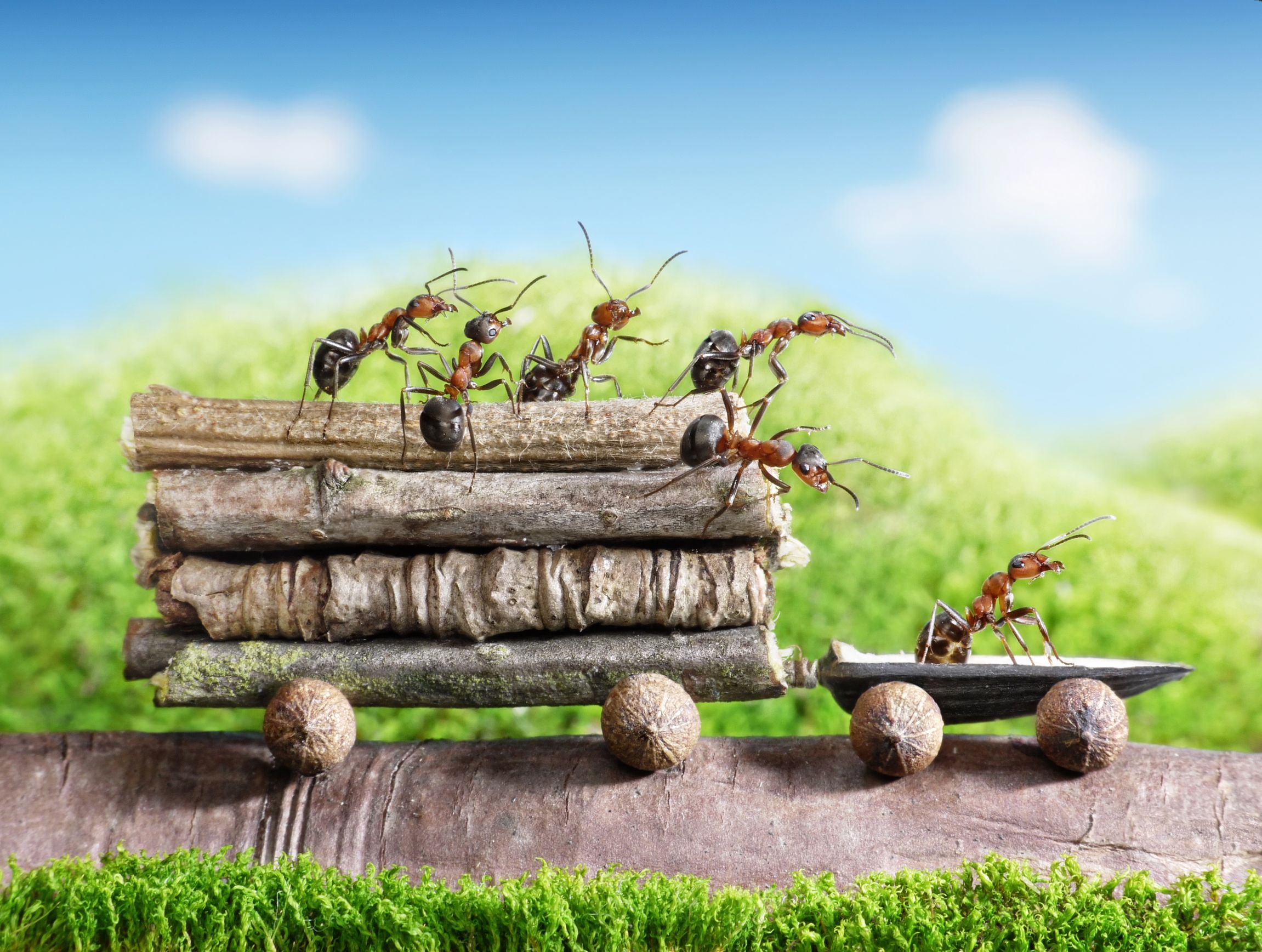 "Series of macro photos ""Ant Stories"" scenes in which"