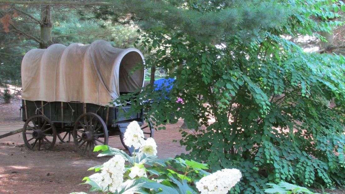 Bookworm Gardens, Sheboygan, WI Garden, Plants