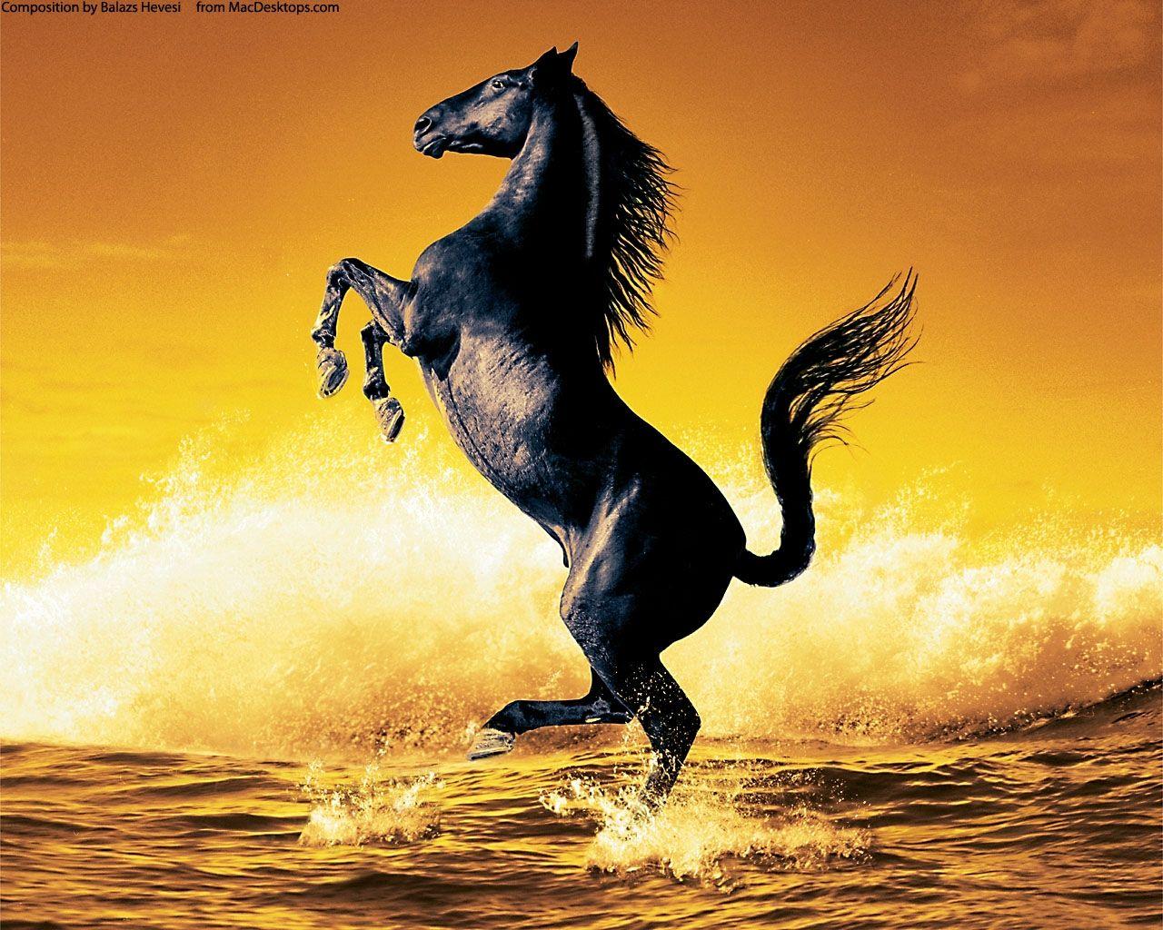 Most Inspiring Wallpaper Horse Ocean - d81d1264d519bb918b49f9a14aac87ab  Picture_92773.jpg