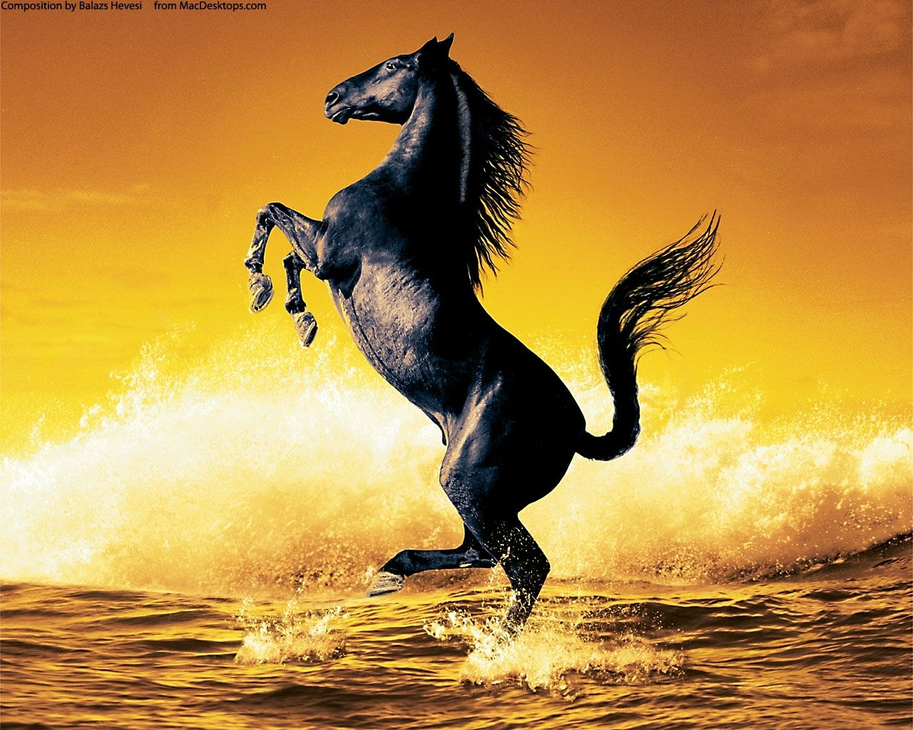 Beautiful Wallpaper Horse Yellow - d81d1264d519bb918b49f9a14aac87ab  Graphic_644964.jpg