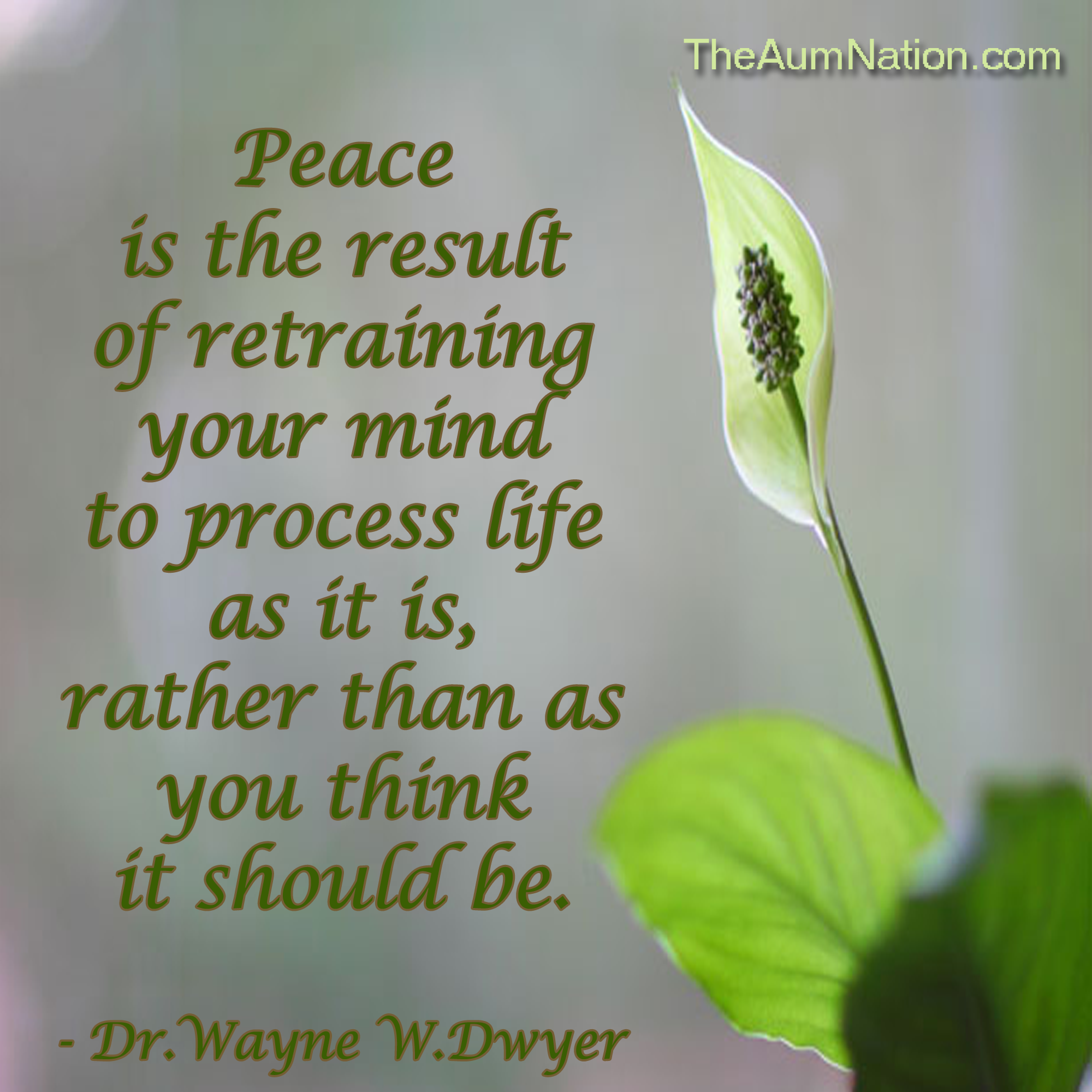 """""""Peace is the result of retraining your mind to process life as it is, rather than as you think it should be."""" - Dr. Wayne W. Dwyer"""