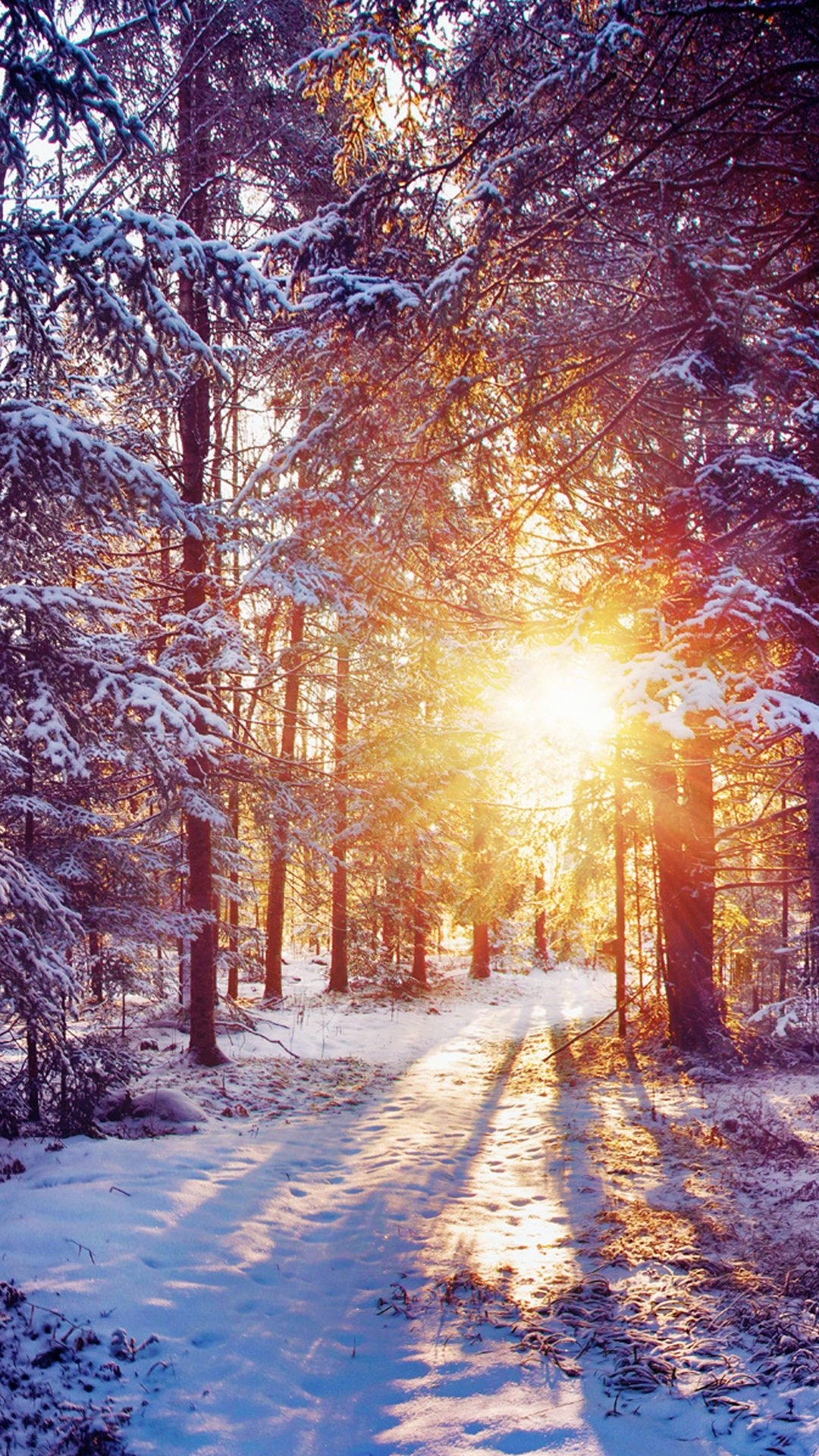 Winter Sunset Shining Through Forest Trees IPhone 6 Plus HD Wallpaper