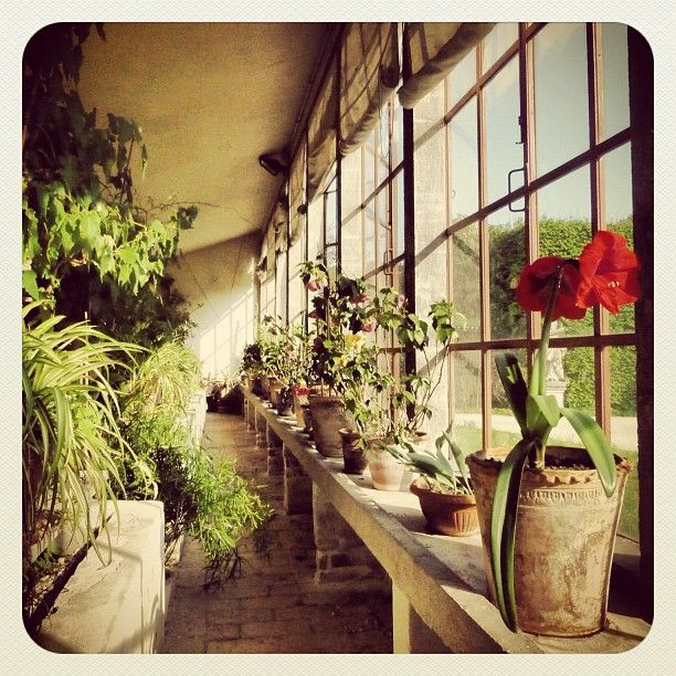 Greenhouse Villa Pisani Italia Andrea Palladio Greenhouse Plants