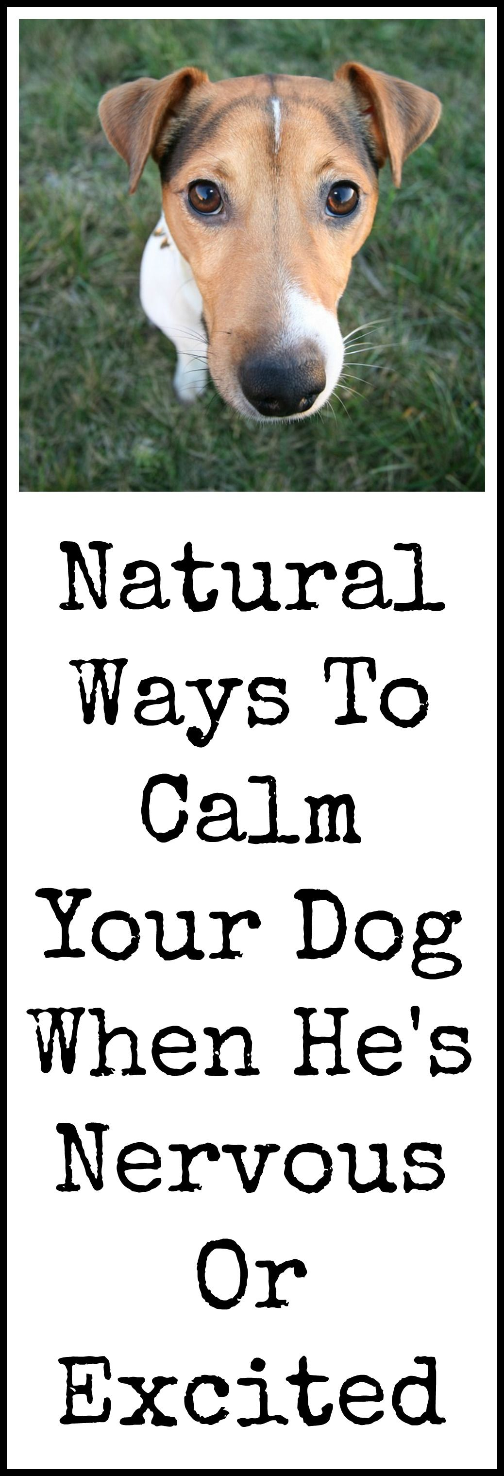 Dog calming products dogs your dog dogs puppies