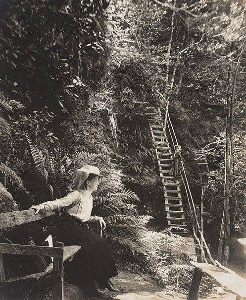 """A Harold Cazneaux Photograph titled """"Mountain Scene, Katoomba"""" dated 1908. From the Harold Cazneaux collection held by the Art Gallery of NSW. This photograph was gifted to the Art Gallery in 1985 by Beryl Cazneaux. Harold Cazneaux is Dick Smith's Grandfather."""