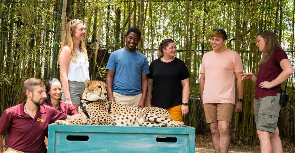 d81eb5275b5d33c1a5fcd6924599d839 - Is The Safari Included In Busch Gardens