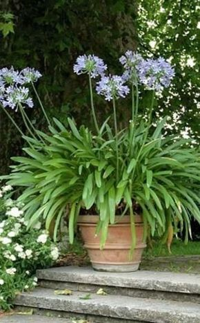 Garten Fur Faule Viel Spass Wenig Arbeit Garten Bepflanzung Garten Ideen