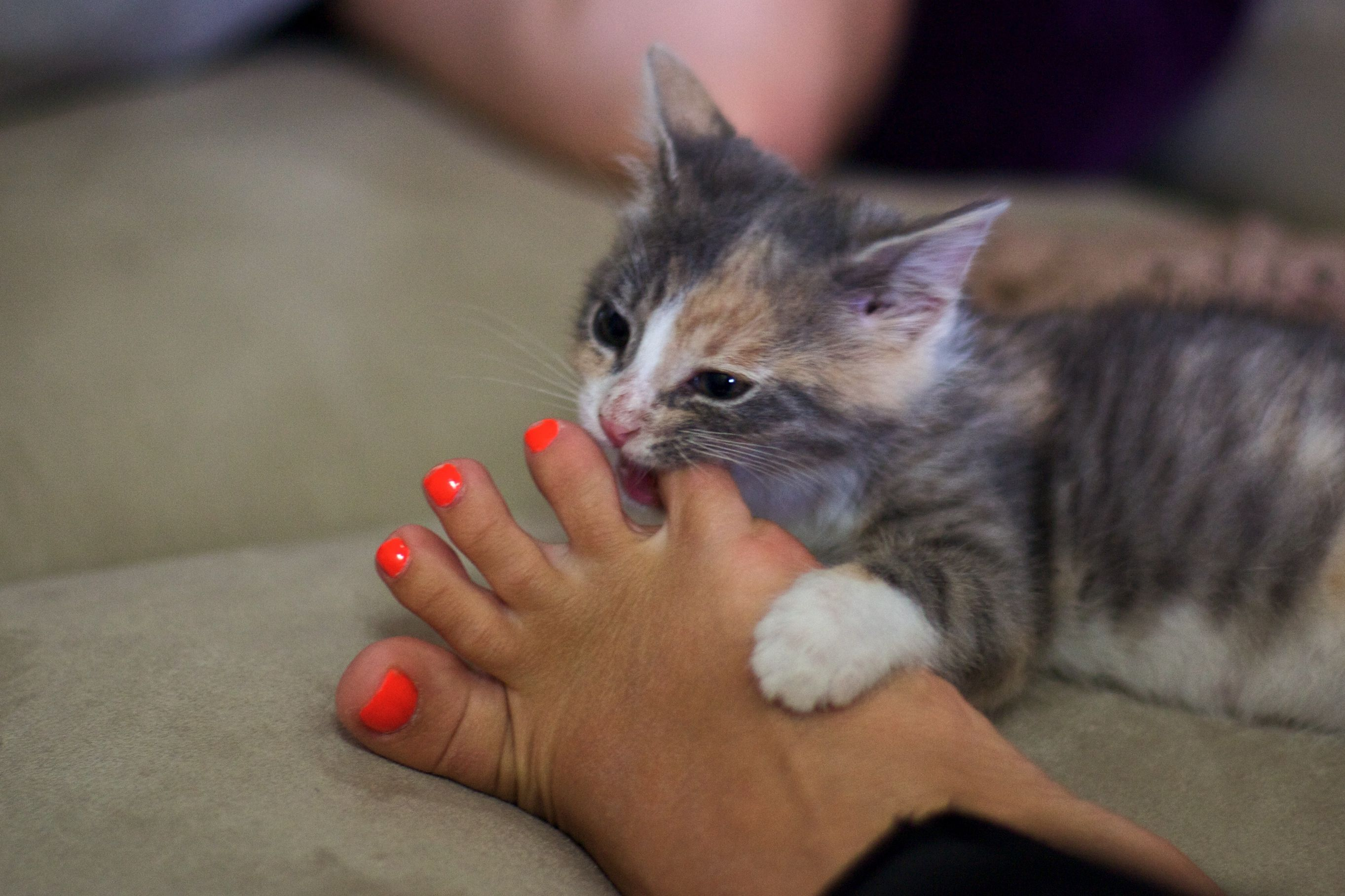 Help For Curbing Your Cat S Aggressive Biting And Scratching With