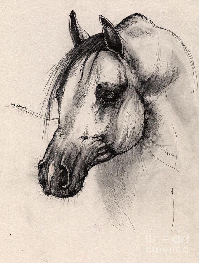 Arabian horse by angel ciesniarska horse drawingshorse pencil
