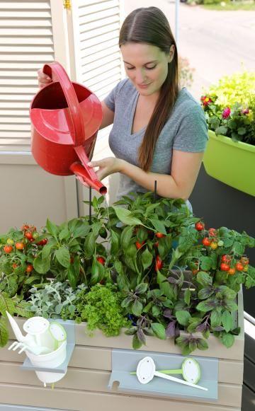 Mobiles Hochbeet Kleiner Naschgarten Fur Den Balkon Hochbeet Garten Pflanzen