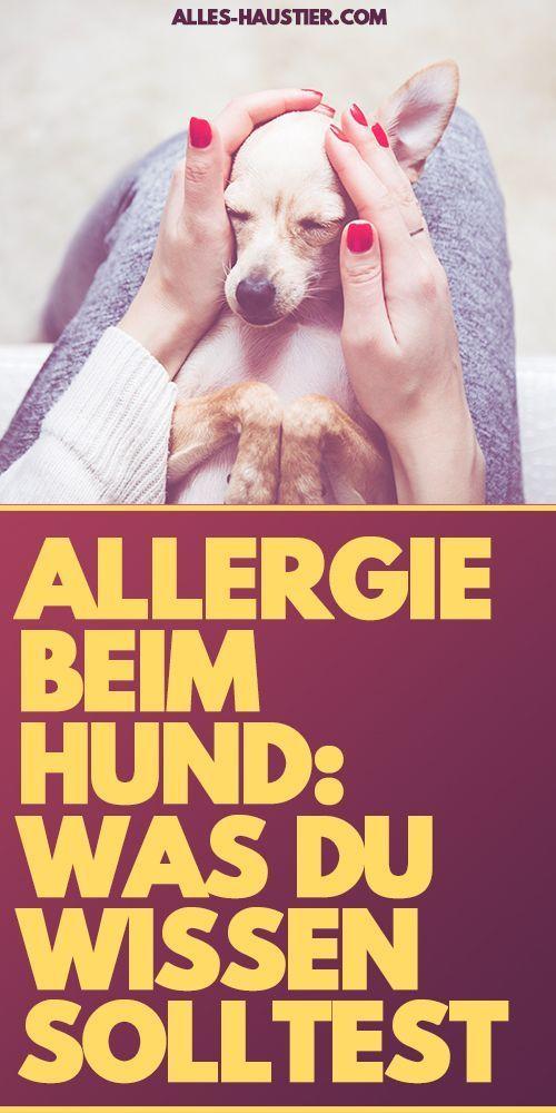 Allergie beim Hund (mit Bildern) Hunde, Hund allergie