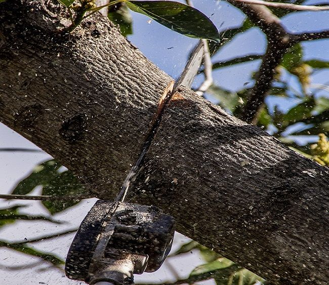 How And Why Trees Can Benefit From Tree Pruning Procedure?