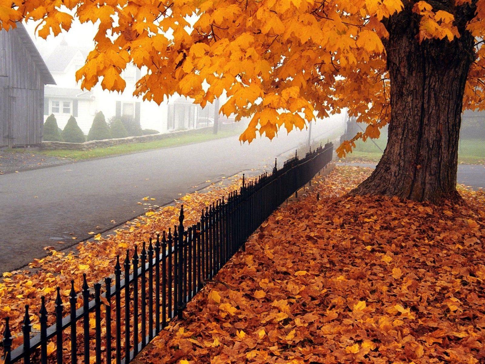 Desktop Wallpaper Hd 3d Full Screen Autumn Trees Fall Colors Scenery