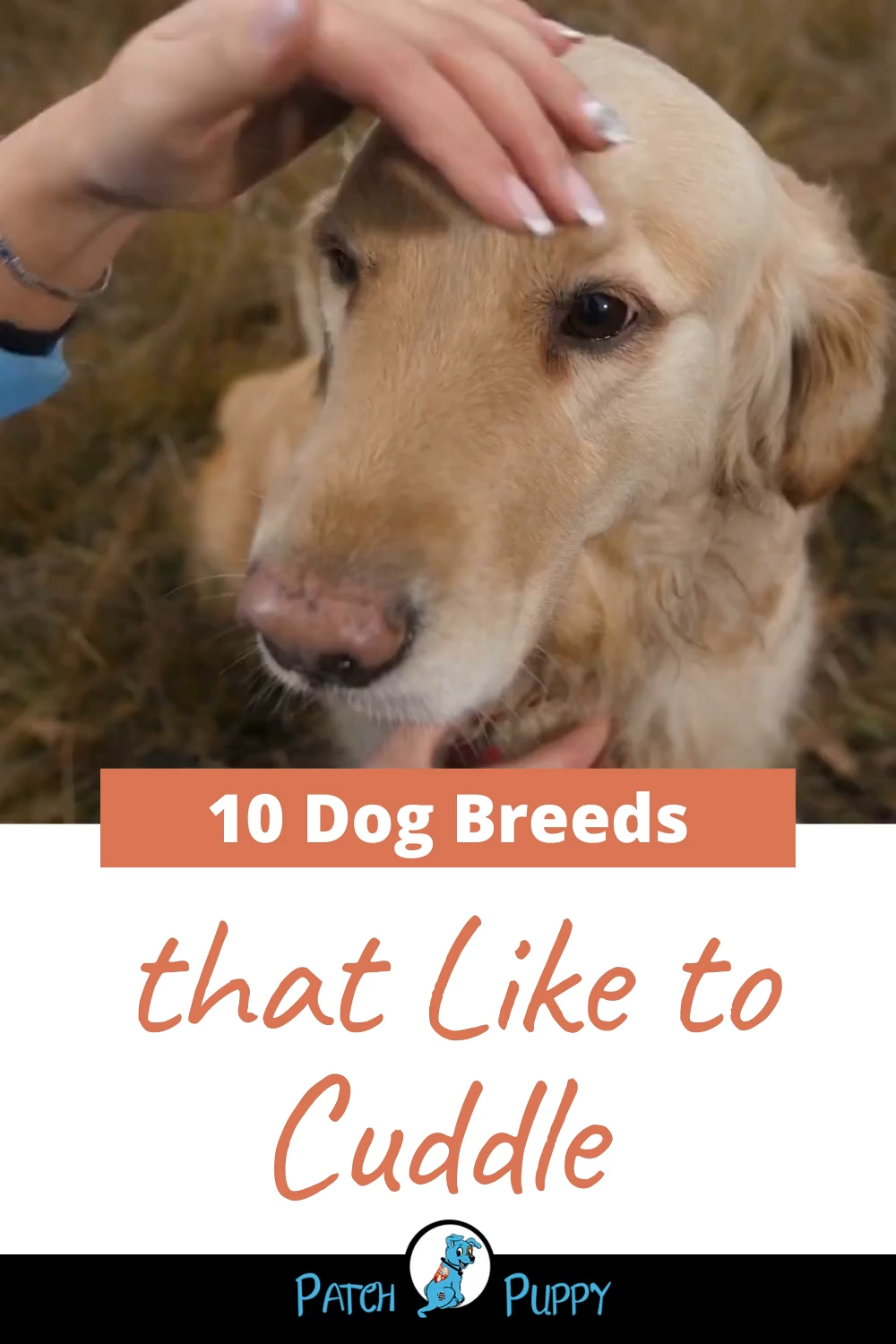 10 Dog Breeds that Like to Cuddle