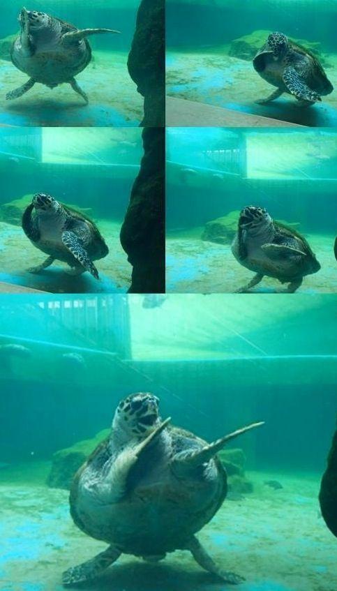 Dancing Turtle Cute Turtles Cute Reptiles Cute Baby Animals