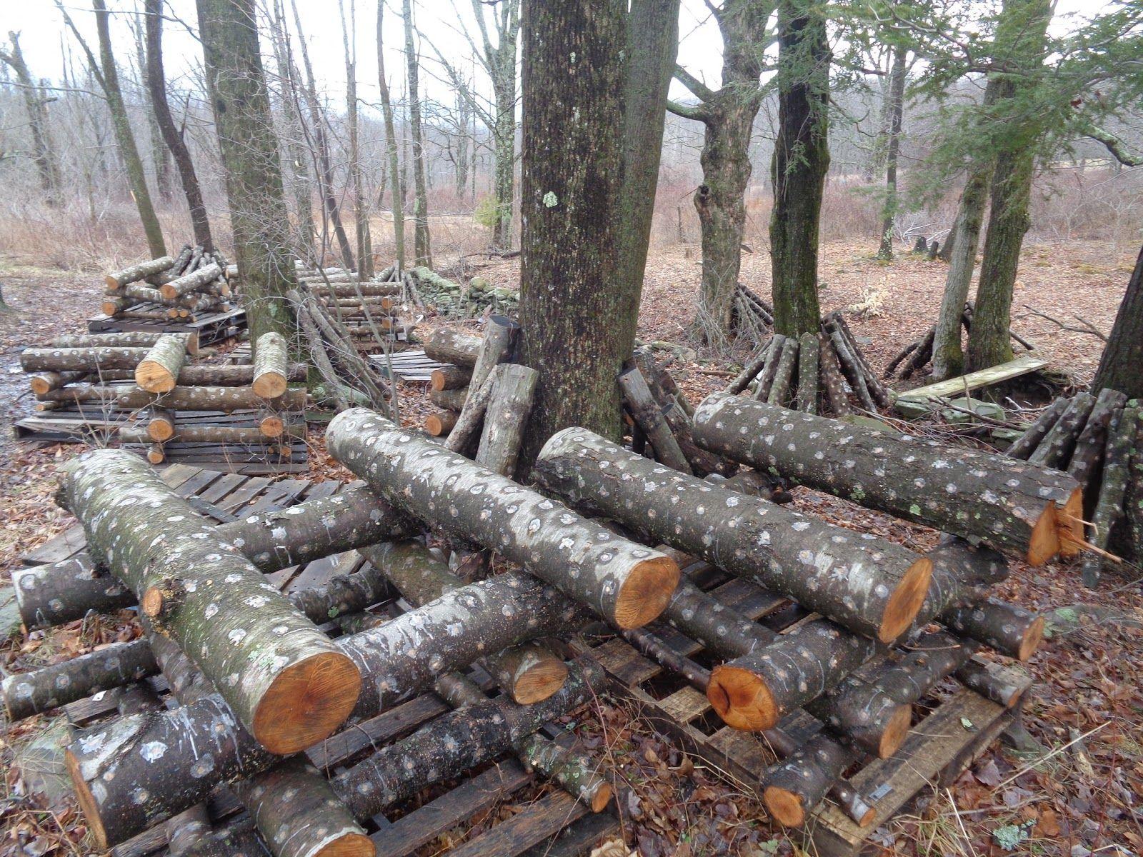 Easiest Guide to Shiitake Logs Urban farming, Stuffed