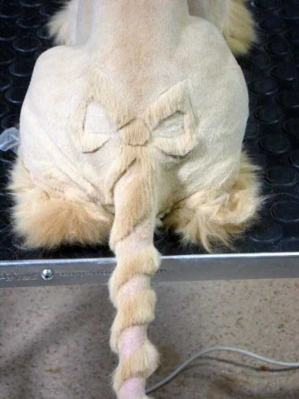 Too Pretty For Words The Most Ridiculous Cat Haircuts Youll Ever