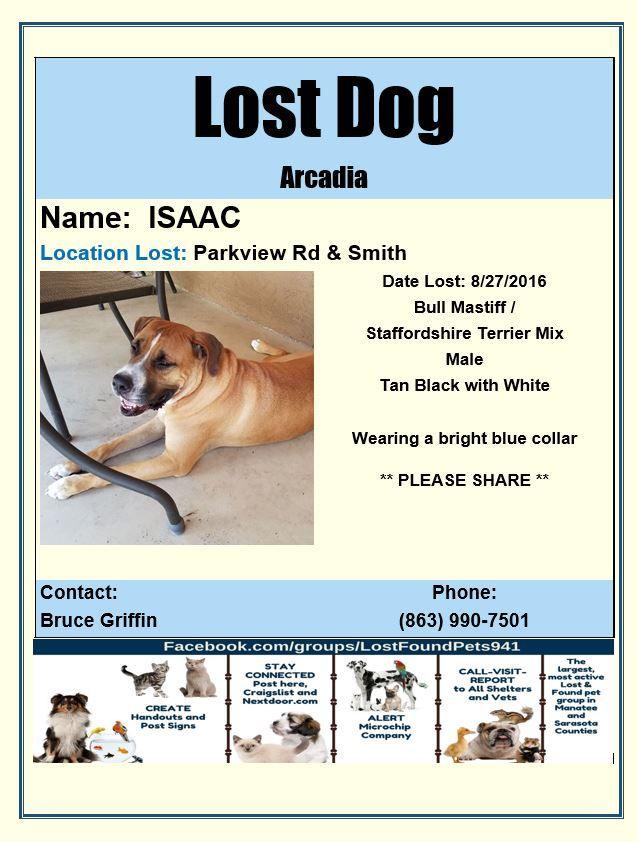Lost Dog Bull Mastiff Mix Male Lostdog Arcadia Fl