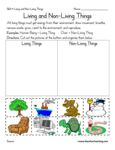 Living And Non Living Things Worksheet Projects To Try