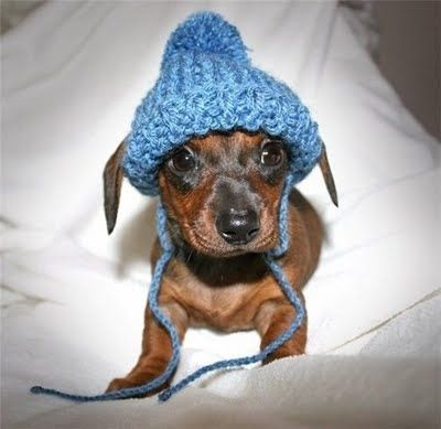 Community Post: 64 Photos Of Animals Wearing Hats