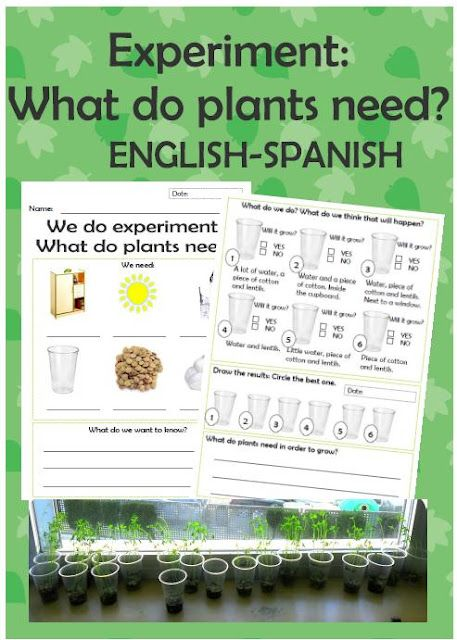 free experiment worksheet what do plants need english and spanish my tpt store plant. Black Bedroom Furniture Sets. Home Design Ideas