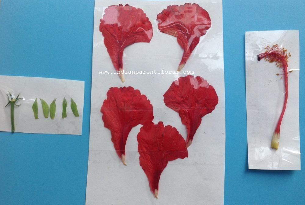 Anita Edwin Crafts English Videos Parts Of A Flower Plants Unit Flowers