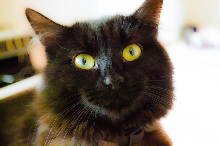 Nudge  Photograph by Naomi Burgess #cat #animals #photography