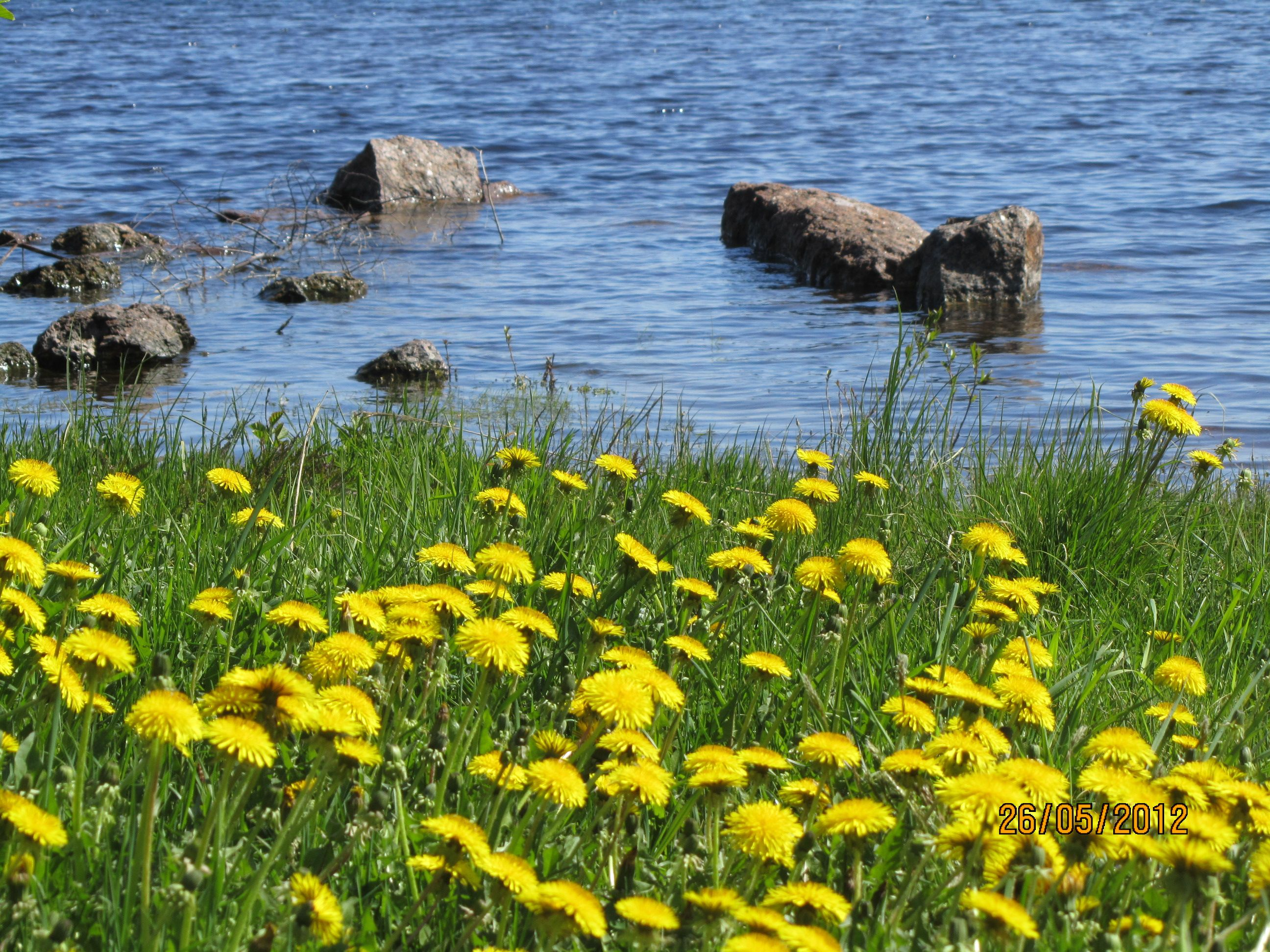 kevät suviranta