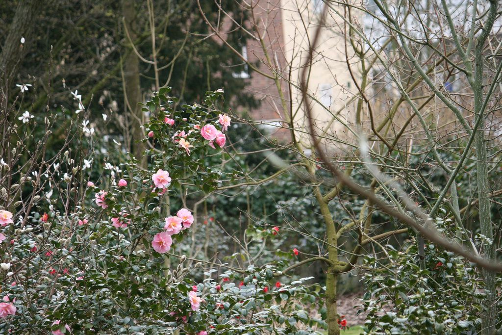 camellias outside 2 by ingeline-art.deviantart.com on @DeviantArt