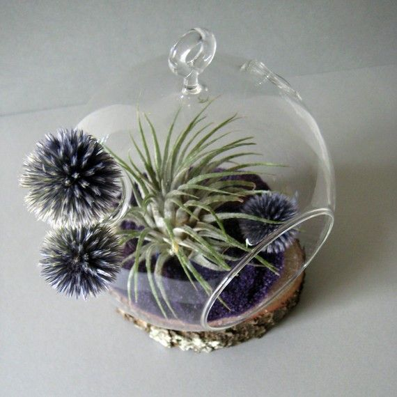 Tillandsia & Echinops Air Plant Globe. Hopefully this terrarium doesn't require too much of a green thumb.