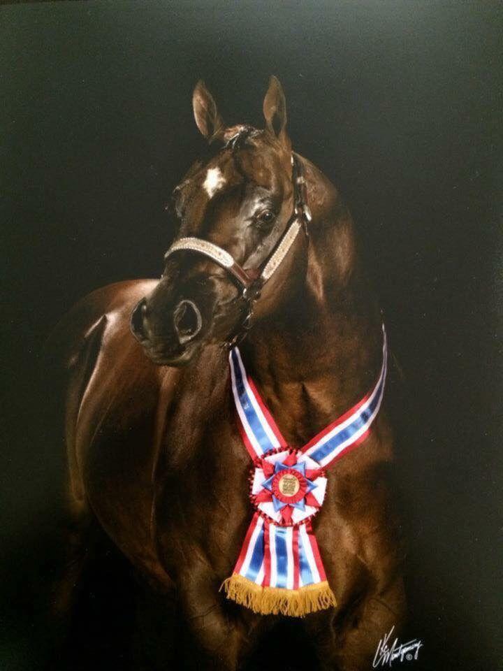 Attencion aqha stallion  Exceptional