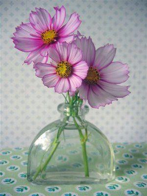 Happy New Year Cosmos Flowers Flower Vases Vase Design