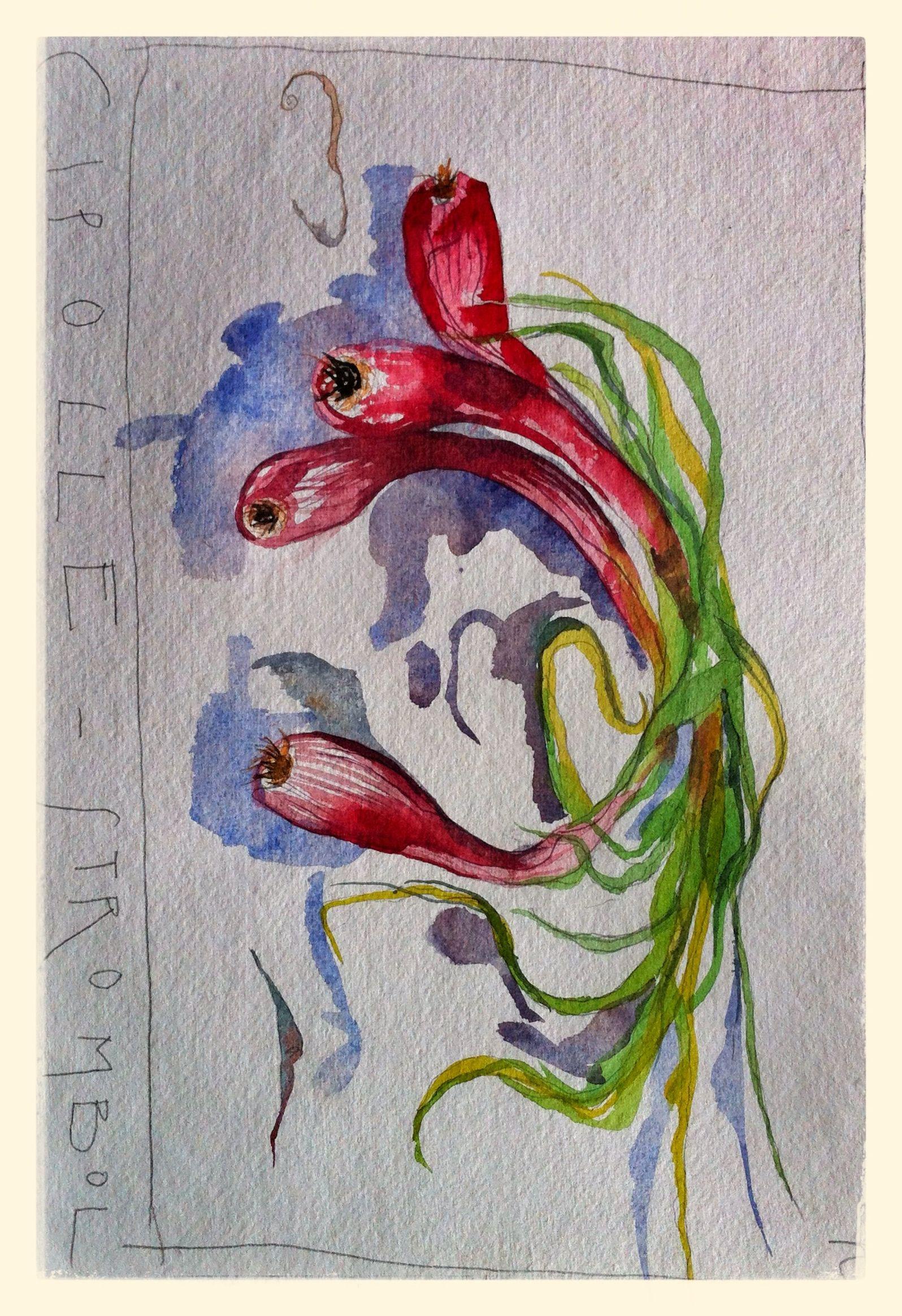 Cipolle - Stromboli