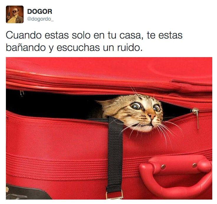 Cuando Estas Solo En Tu Casa Humor Divertido Sobre Animales Gatos Gato Escondido