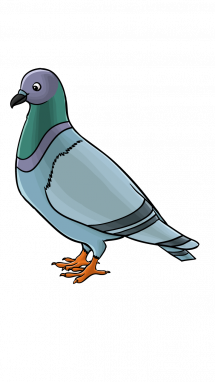 How To Draw A Pigeon Step 14 Childrens Art In 2019 Animal