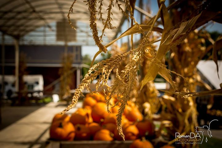 FALL IS HERE!  #fall #pumpkins #apples #gords #farm #readyforhalloween #ilovefall  I LOVE FALL!! (C) RomanDA Photography All Rights Reserved
