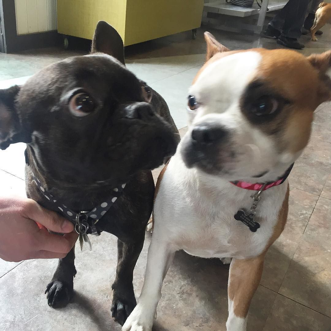 Saw my friend rubythefrenchieslife at the