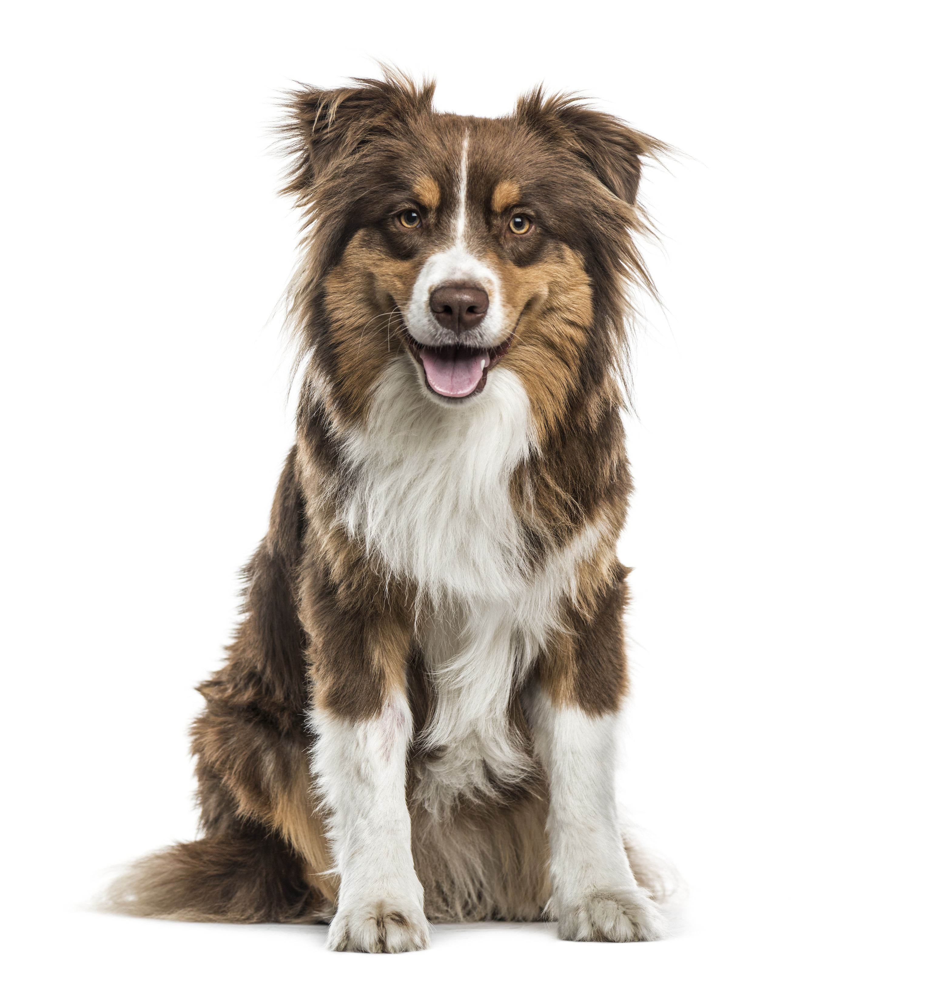 Doggos R Us Is The One Stop Online Store For All Pet Products And Accessories Dog Quizzes Dog Breed Quiz Dogs
