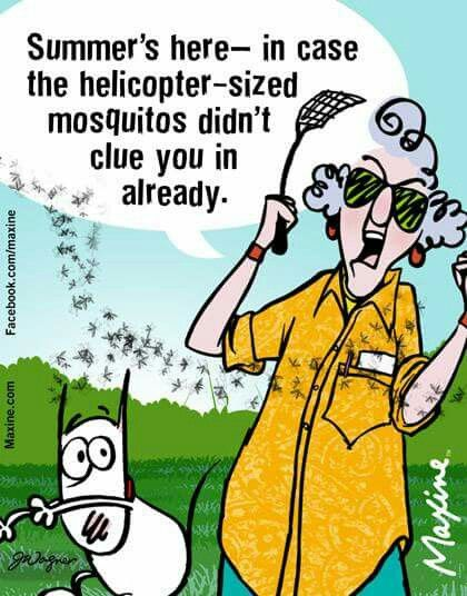 Pin By Janet Vigil On Maxine Maxine Old Lady Humor Humor