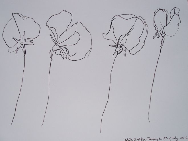 Black Line Flower Drawing : Narcissus december birth flower tattoo design im probably going