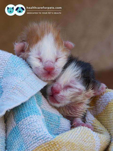 Is It Bad If I Stop My Kitten Trying To Nurse On Me Newborn Kittens Baby Kittens Kittens
